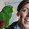 Angus the High Speed Parrot