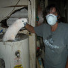 Troy, Ohio Bird Rescue Situation