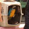 Humane Society Raid in Ohio Rescues 100 parrots